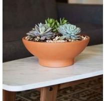 """Succulent Garden 5.5"""" Low Rome Bowl Ftd"""
