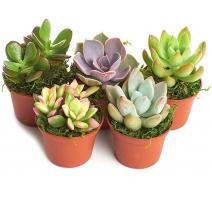 """Succulent Garden 5.5"""" Low"""