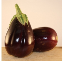 Aubergine Black Beauty 0,2g - Semences