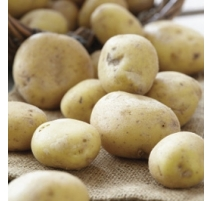 Patate Kennebec 2kg (Blanche)