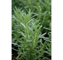Semences de Fines Herbes