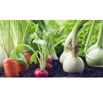 Semences de Légumes et Fruits