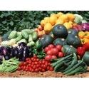 Semences de Légumes et Fruits Bio